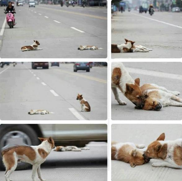 Traurige Tierbilder