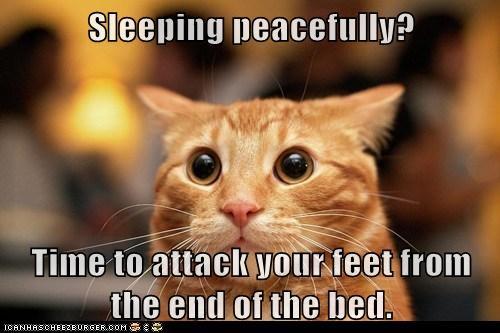 Cat Sharpening Claws Meme