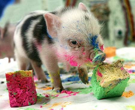 mini pig by hilary1992-d35p31r