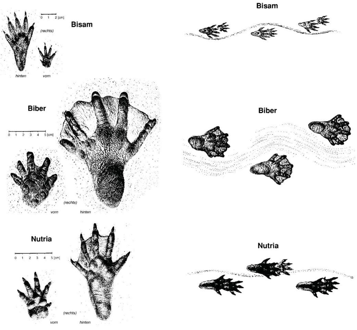 unbekannte tierspuren im schnee (seite 3) - allmystery
