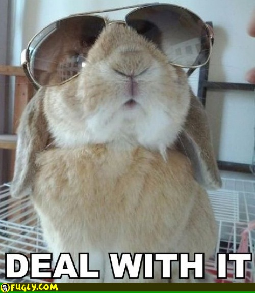 put-on-your-big-bunny-glasses-and-deal-w