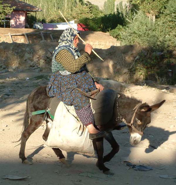 donkey ve women