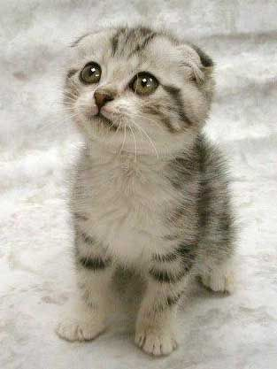 cute kittenweee