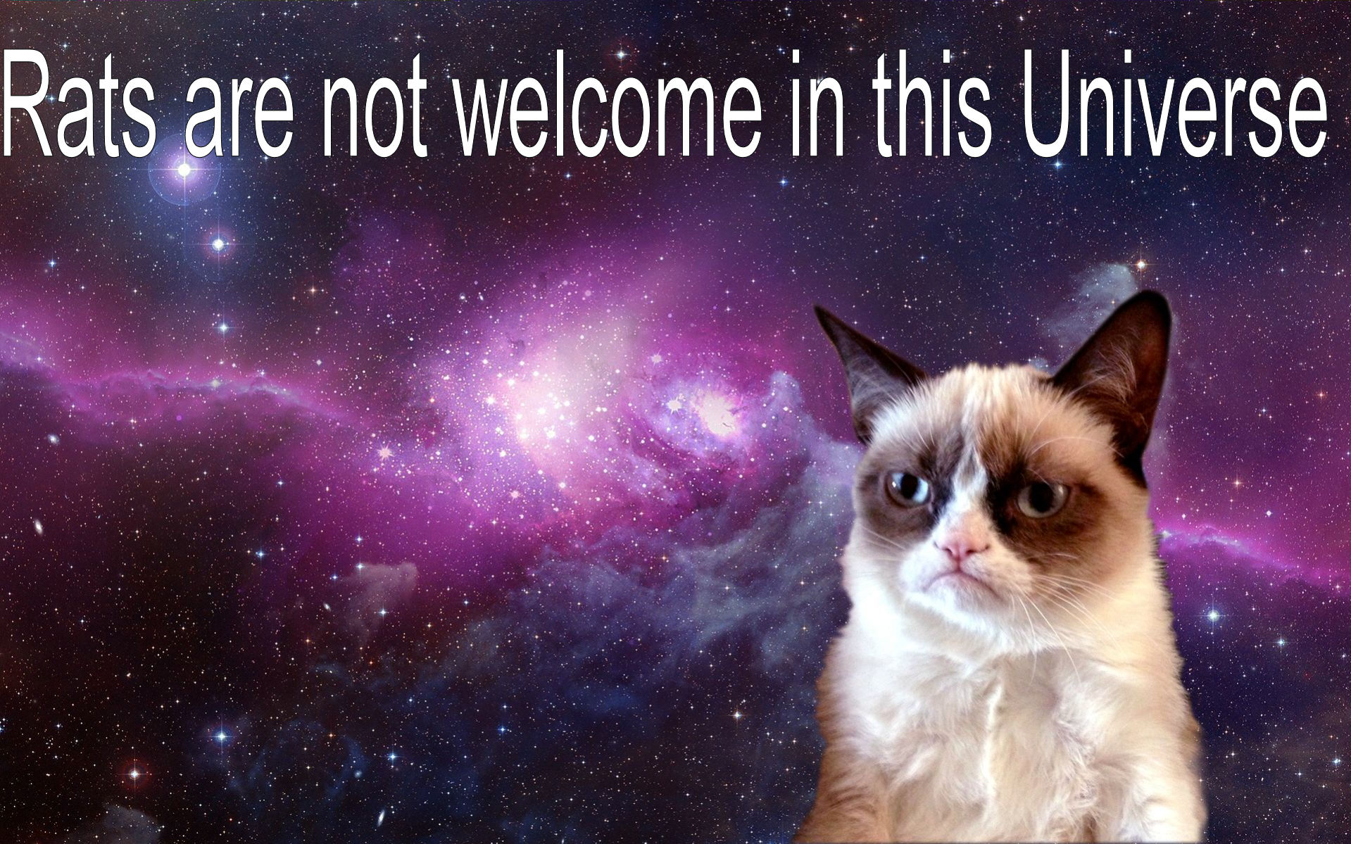 958c18 Grumpy-Cat-in-Space2