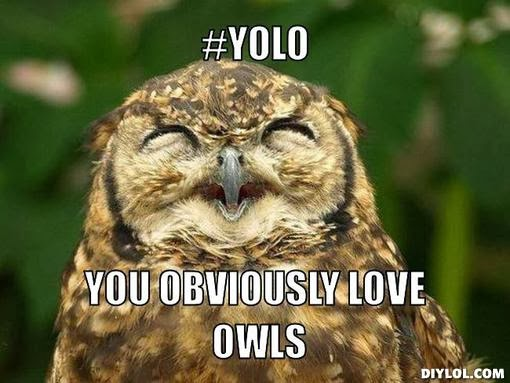owl-yolo-meme-generator-yolo-you-obvious
