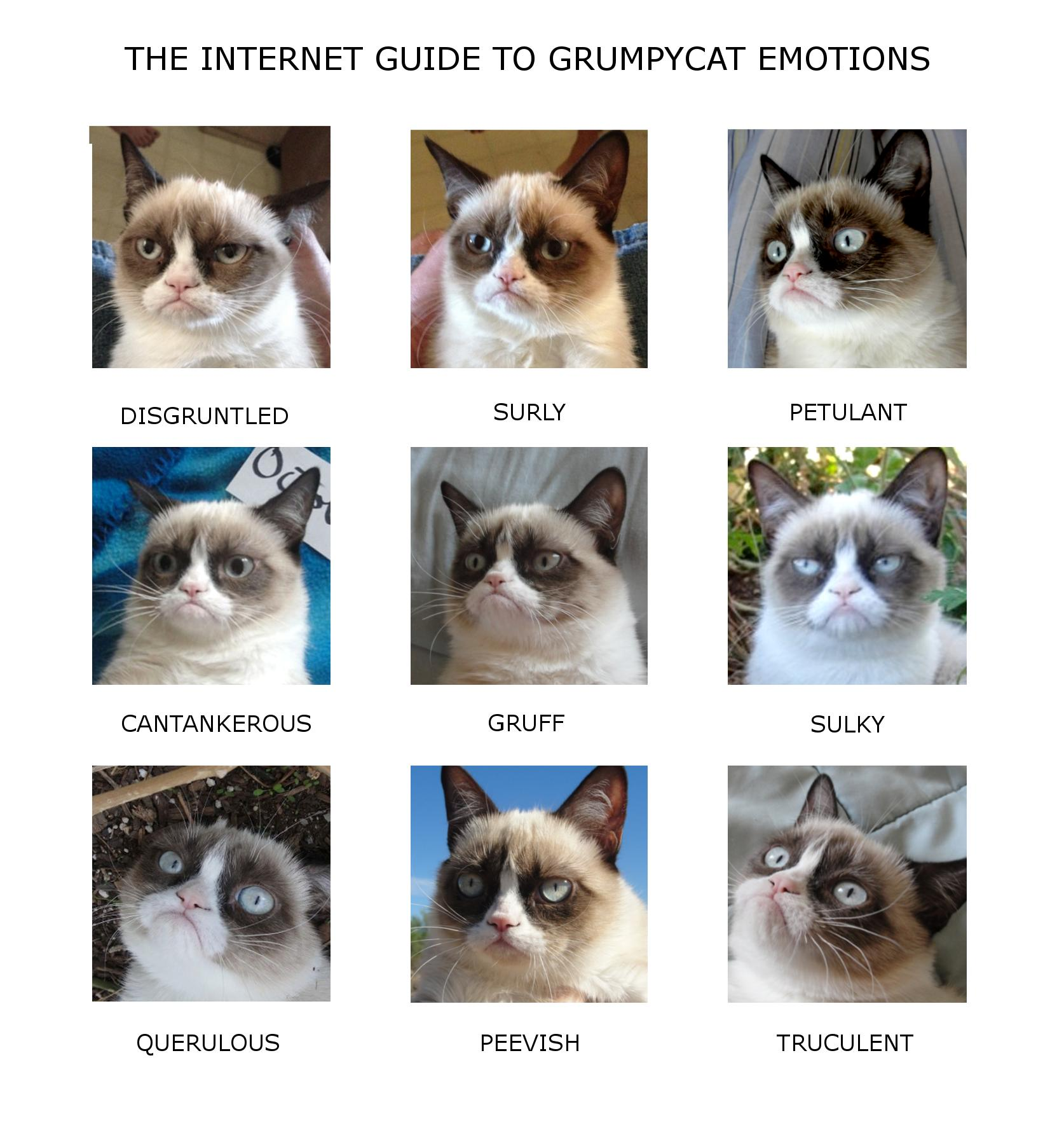 Grumpy-Cat-Emotion-Chart