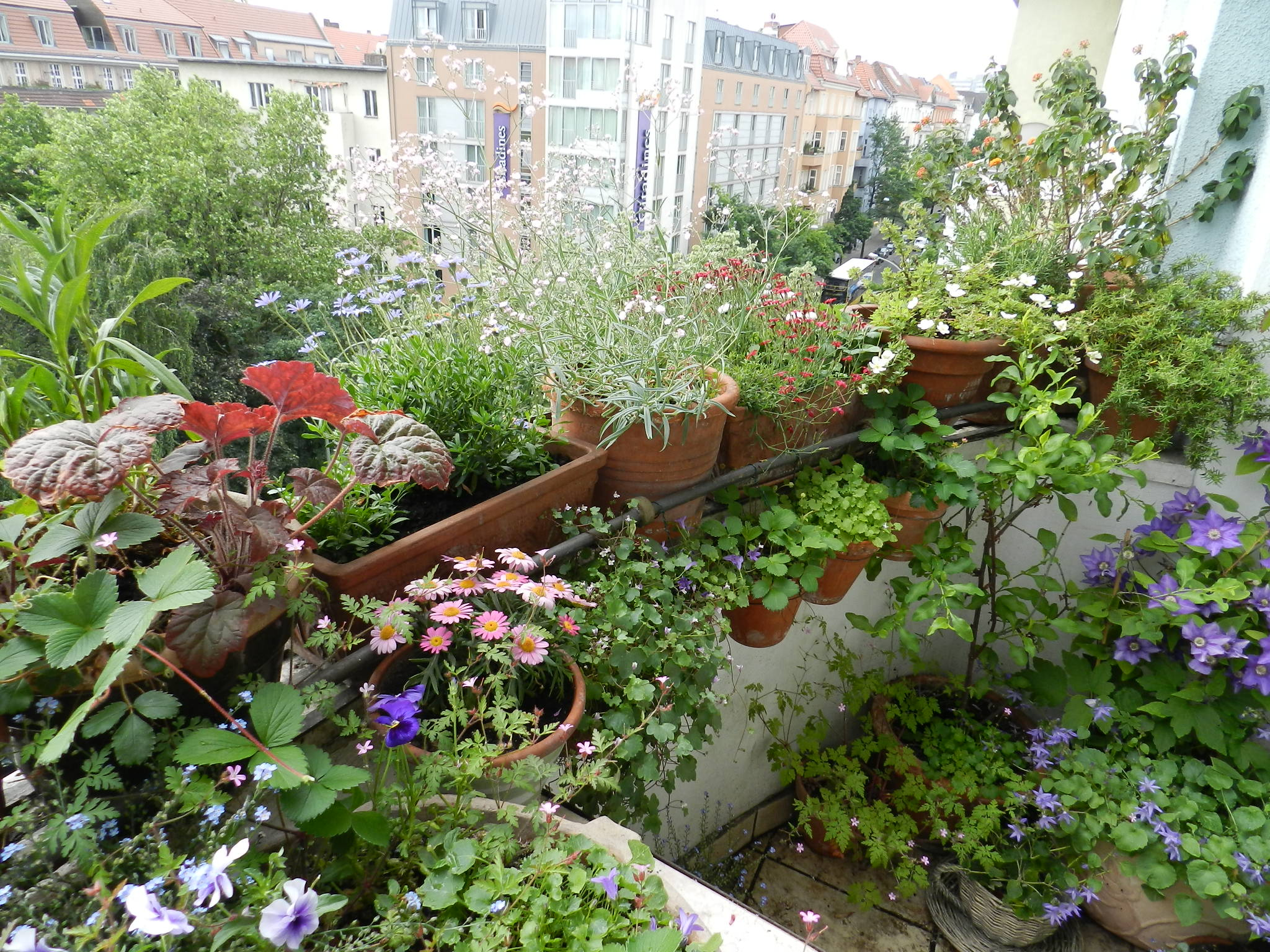 was bl ht bei euch gerade auf dem balkon im garten co. Black Bedroom Furniture Sets. Home Design Ideas