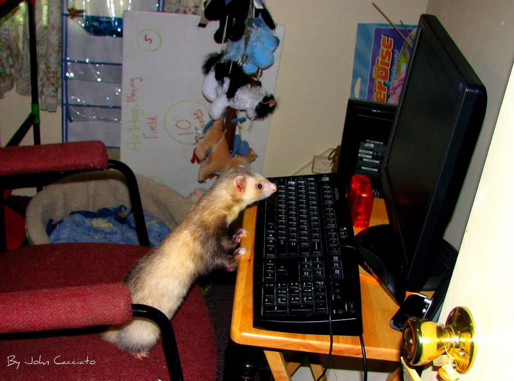 t3d4a1b 832a2c Ferret on PC