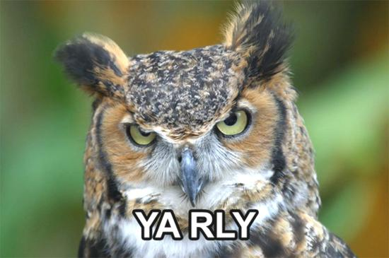 funny owl picture 28