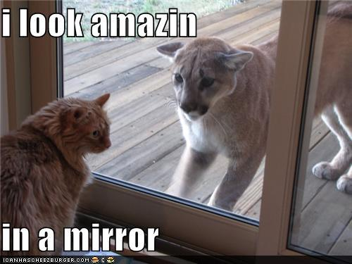 tdyjN1n funny-pictures-i-look-amazin-in-a-mirror