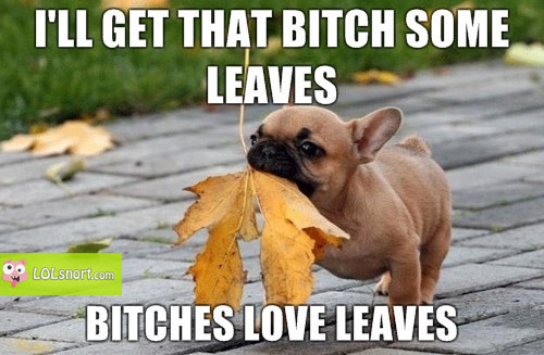 bitches-love-leaves