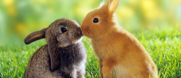 animal-couple-facebook-timeline-cover-13