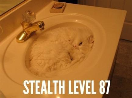 stealth-cat