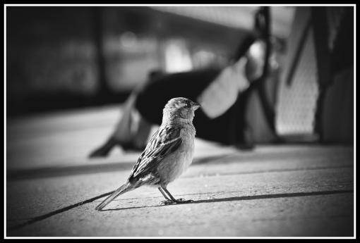 Ziemlich groer Vogel, schwarz wei wer-weiss-wasde