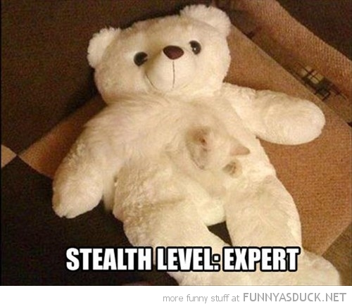 funny-pictures-stealth-level-expert-cat-