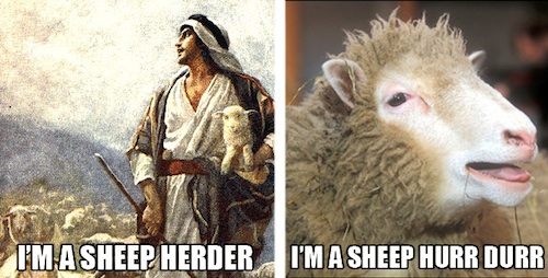 sheep-hurr-durr