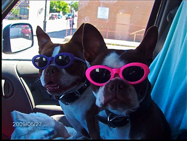 dogswithsunglasses