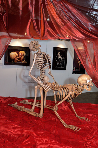 teG9fBb skeleton-sex