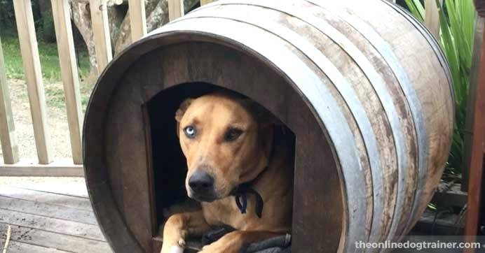 barrel-dog-house-the-converted-wine-barr