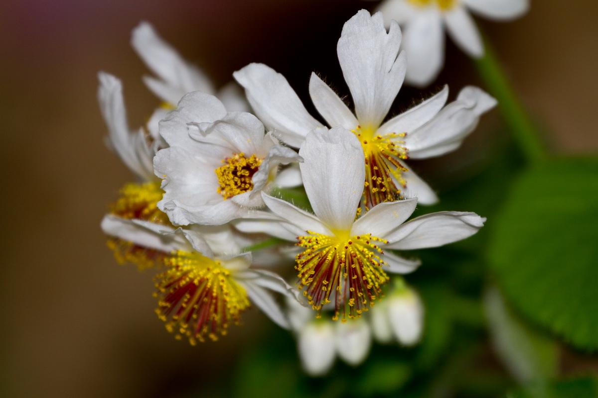 Naturfotografie eure bilder von unserer natur seite 123 allmystery - Zimmerlinde bilder ...