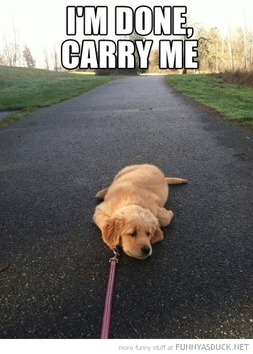 funny-dog-lying-down-leash-tired-carry-m