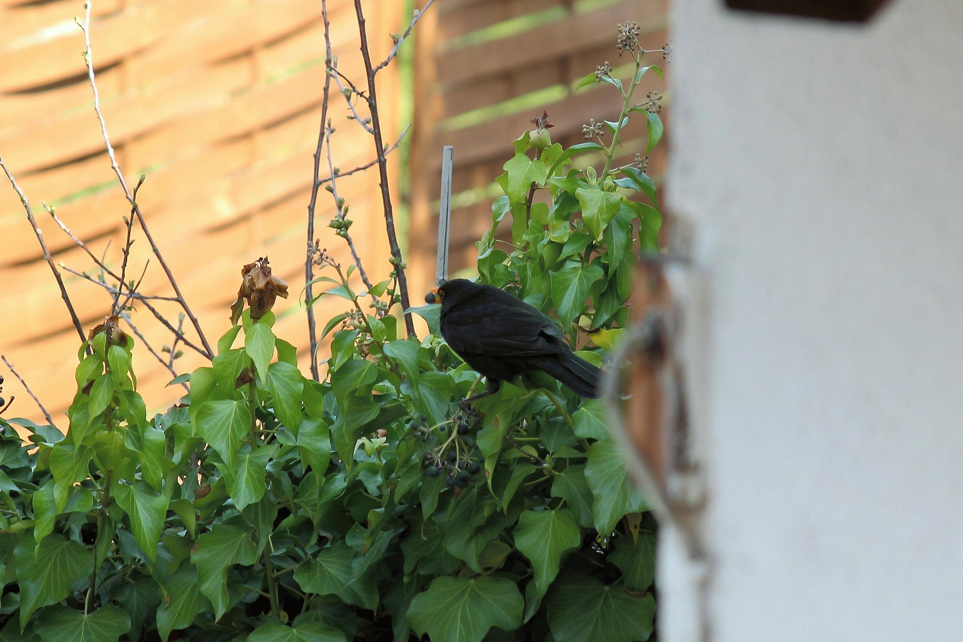 tewr3Bf amsel03042012cm7iso
