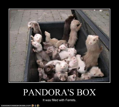 funny-pictures-ferrets-are-in-box