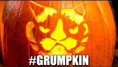 Grumpy Cat meets Grump O Lantern 1970068