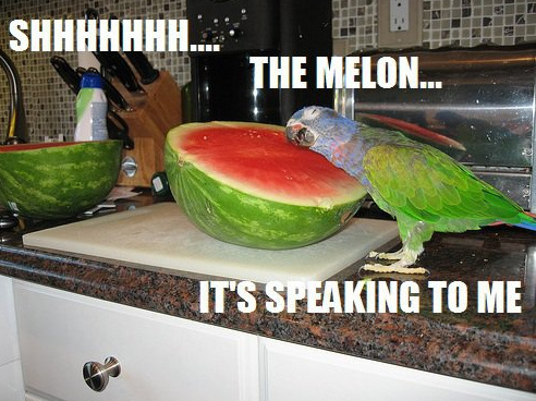 the-melon-is-speaking-to-me