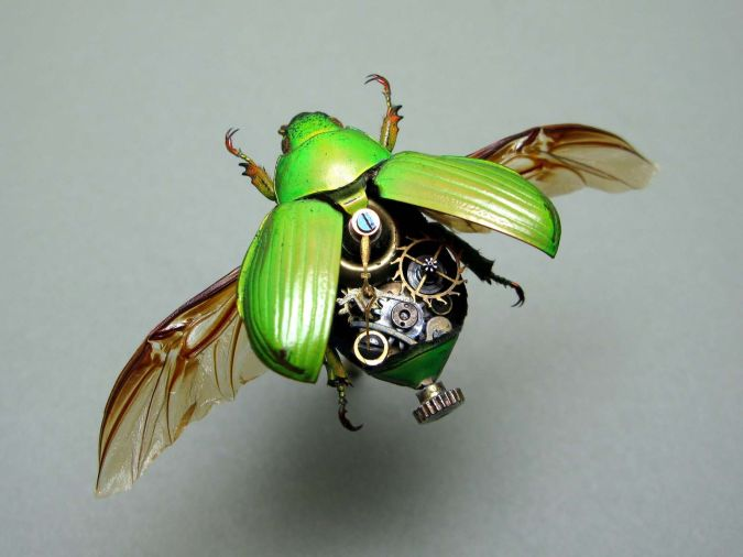 Mechanical-Beetle