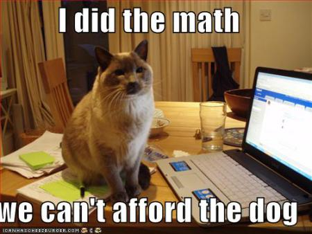 funny pictures cat did the math and you