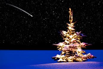 Stimmungsbilder thread zum advent und zu weihnachten - Tannenbaum englisch ...