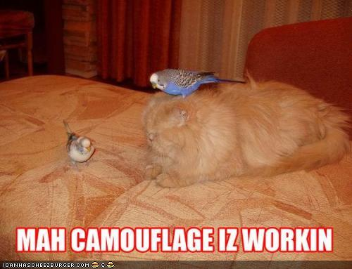 thIRYoD funny-pictures-cat-has-camouflage