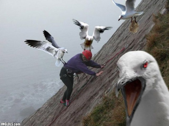 tj8wSpd rock-climbing-gone-bad-from-evil-seagull