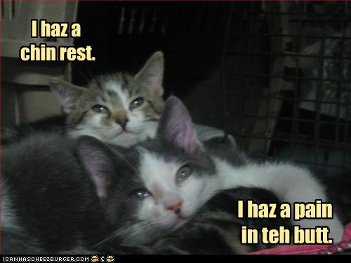tlNeKgG funny-pictures-i-haz-a-chin-rest