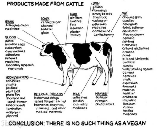 tnNPA8v products-made-from-cattle