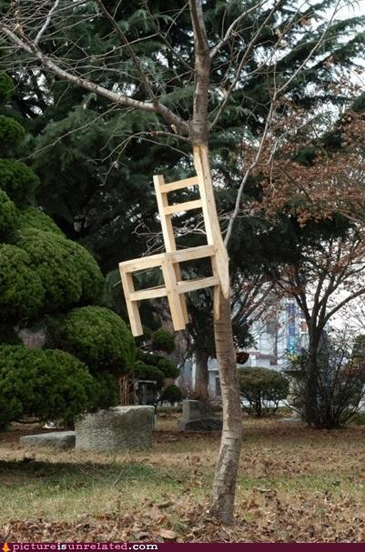 tp5fE68 wtf-photos-videos-trees-grow-from-chairs