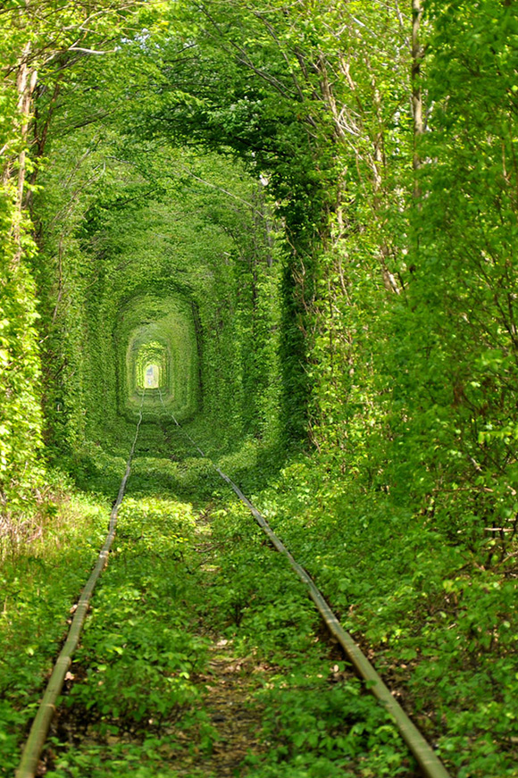 trq8Vg7 Beautiful-Train-Tree-Tunnel-1