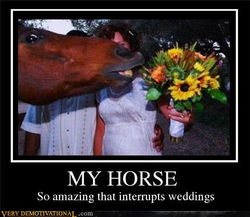 tuPt8Q9 demotivational-posters-my-horse