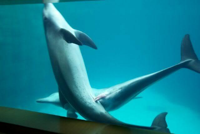 Free dolphin sex video
