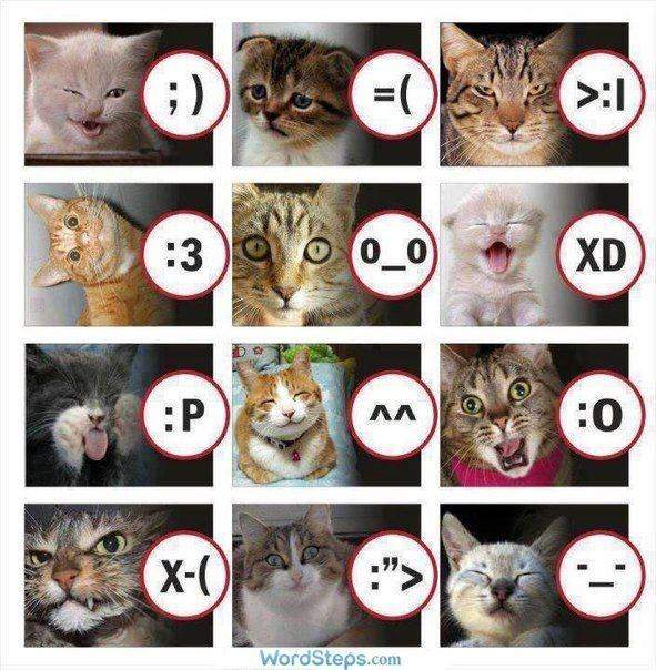 cat-smilies-by-wordsteps-com