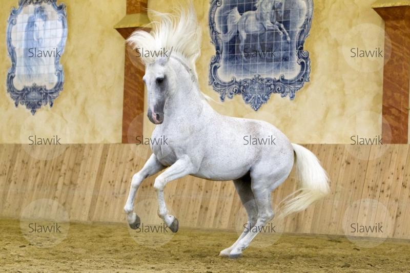 Pferd Einen Blasen
