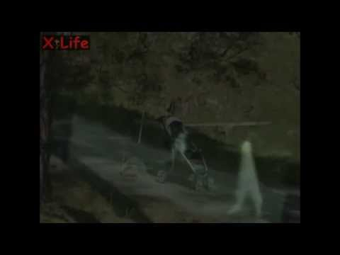 Youtube: Strange_Alien_Stick_like_creatures ( Nightcrawler) Fresno_in_Yosemite-3 Videos Collection.flv