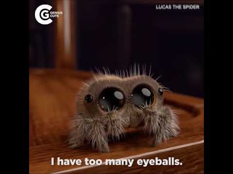 Youtube: Lucas The Spider