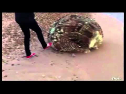 Youtube: Unknown Creature Washed up on Japan's beach