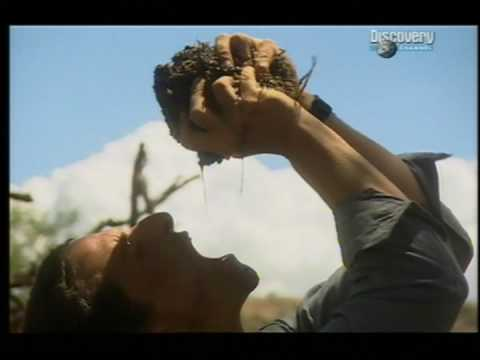 Youtube: Bear Grylls drinking from elephant dung!!