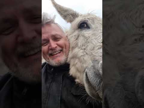 Youtube: Attacked by gang of Donkeys