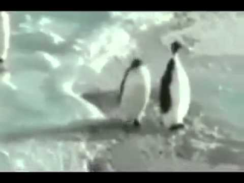 Youtube: Pinguin schubst Pinguin