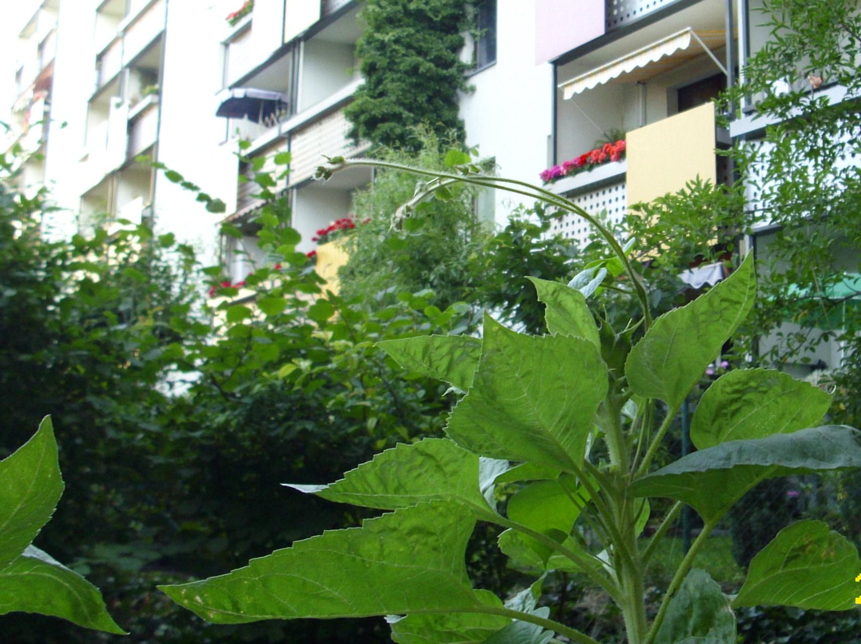 was bl ht bei euch gerade auf dem balkon im garten co seite 139 allmystery. Black Bedroom Furniture Sets. Home Design Ideas