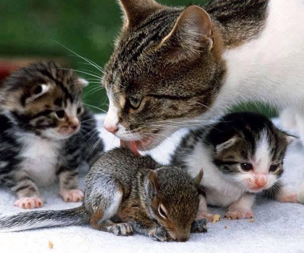 Mama Cat Adopts Squirrel